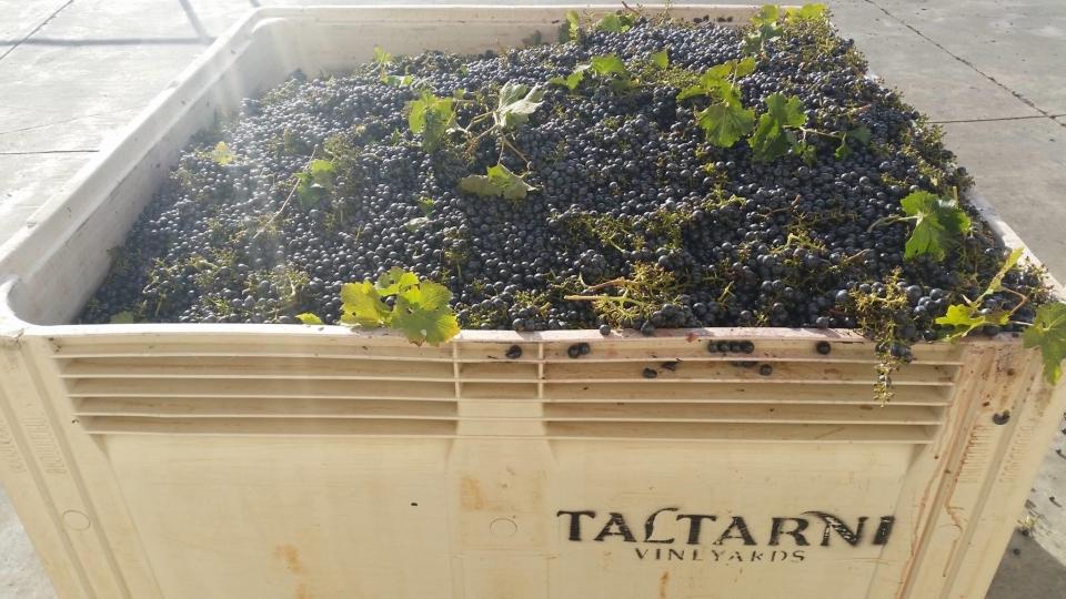托塔尼 Taltarni 葡萄園15